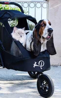 Petique Stroller kleine Hunde